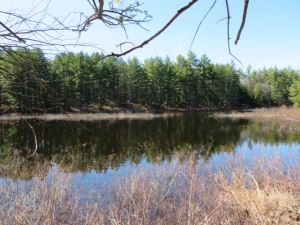 NEW PROPERTY 5.02 ACRES PITCAIRN, ST LAWRENCE COUNTY, NY<br>SALE PENDING!<br>5.02 Acres<br>Pitcairn, NY<br>$27,900.00<br>